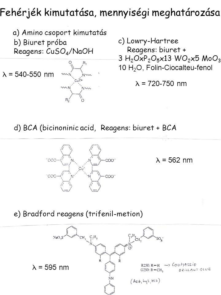Fehérjék kimutatása, mennyiségi meghatározása a) Amino csoport kimutatás b) Biuret próba Reagens: CuSO 4 /NaOH c) Lowry-Hartree Reagens: biuret + 3 H