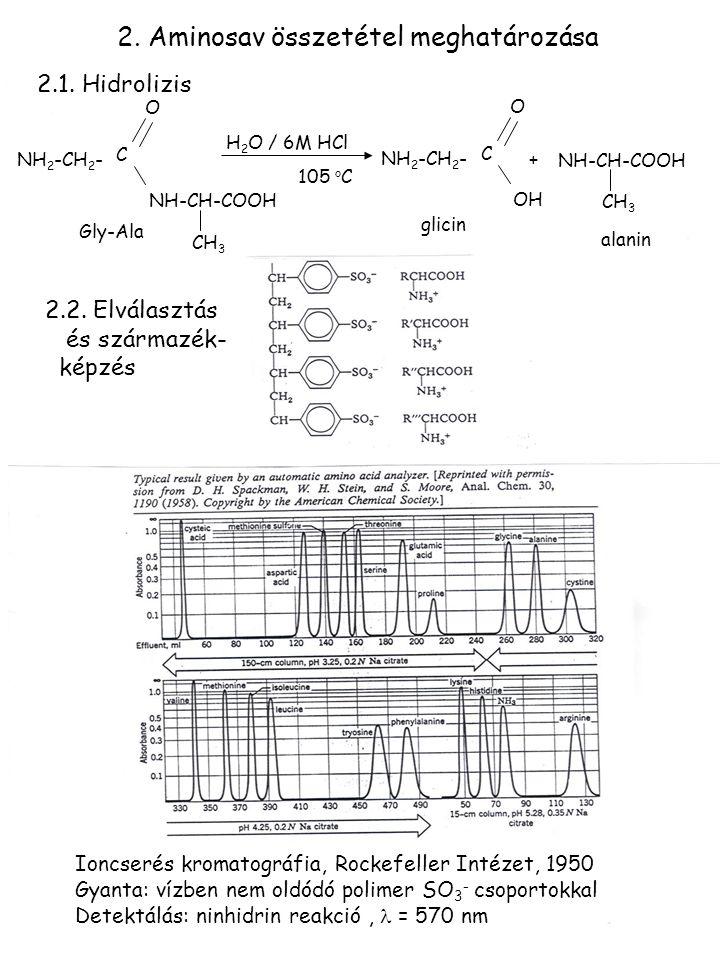 2. Aminosav összetétel meghatározása NH 2 -CH 2 - C O NH-CH-COOH CH 3 H 2 O / 6M HCl 105 o C NH 2 -CH 2 - C O OH NH-CH-COOH CH 3 + Gly-Ala glicin alan