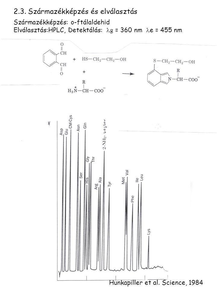 2.3. Származékképzés és elválasztás Származékképzés: o-ftálaldehid Elválasztás:HPLC, Detektálás: g = 360 nm e = 455 nm Hunkapiller et al. Science, 198