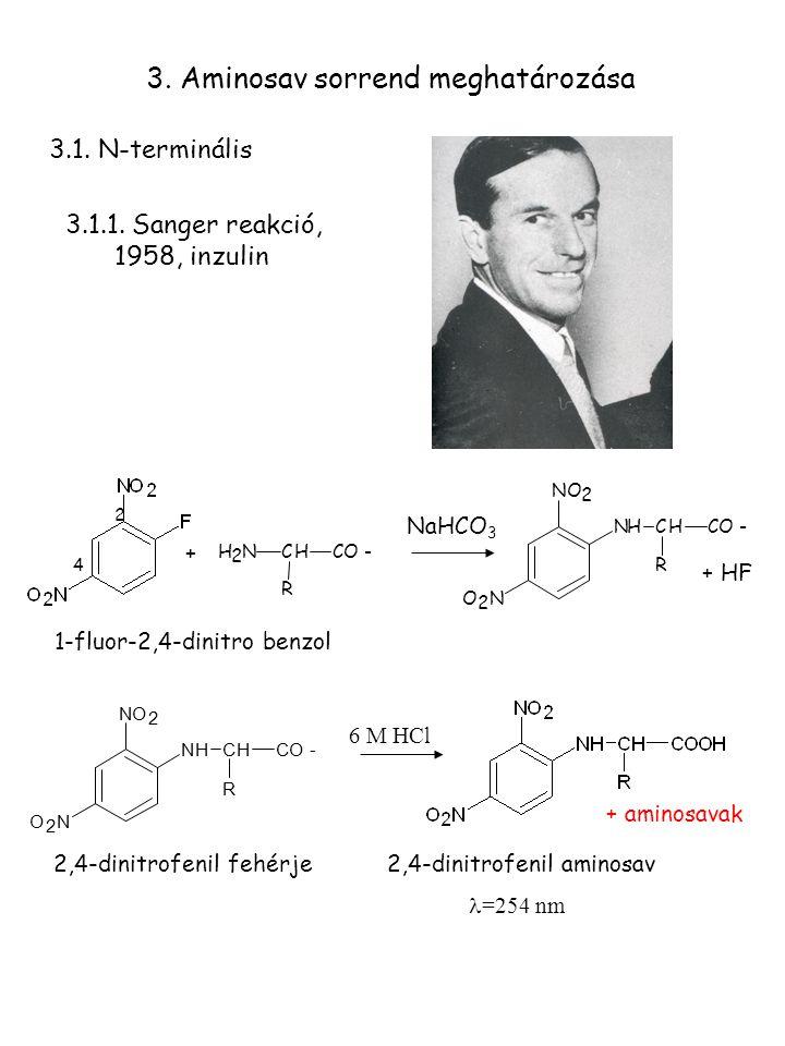+ + HF NaHCO 3 2 4 1-fluor-2,4-dinitro benzol 2,4-dinitrofenil aminosav =254 nm 3.1.1. Sanger reakció, 1958, inzulin 3. Aminosav sorrend meghatározása