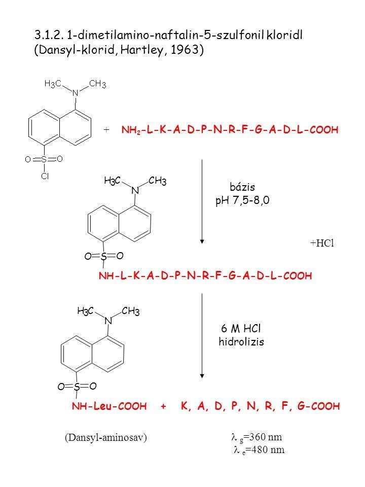 + bázis pH 7,5-8,0 +HCl  g =360 nm  e =480 nm (Dansyl-aminosav) NH 2 -L-K-A-D-P-N-R-F-G-A-D-L- COOH 3.1.2. 1-dimetilamino-naftalin-5-szulfonil klori