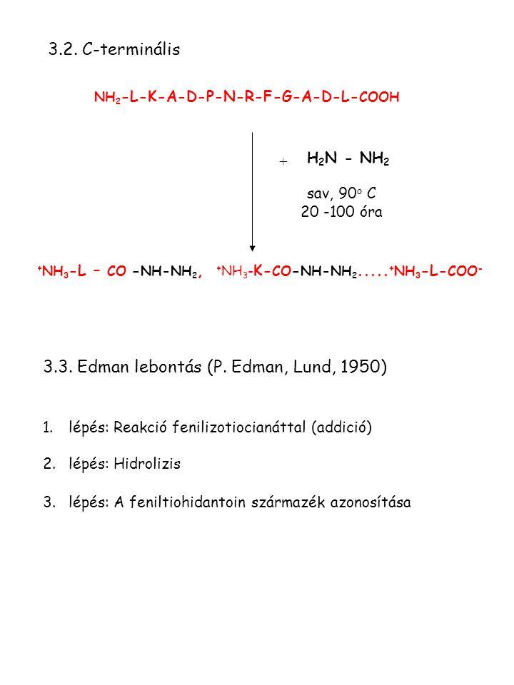+ sav, 90 o C 20 -100 óra NH 2 -L-K-A-D-P-N-R-F-G-A-D-L- COOH 3.2. C-terminális H 2 N - NH 2 + NH 3 -L – CO - NH-NH 2, + NH 3 - K- CO - NH-NH 2..... +