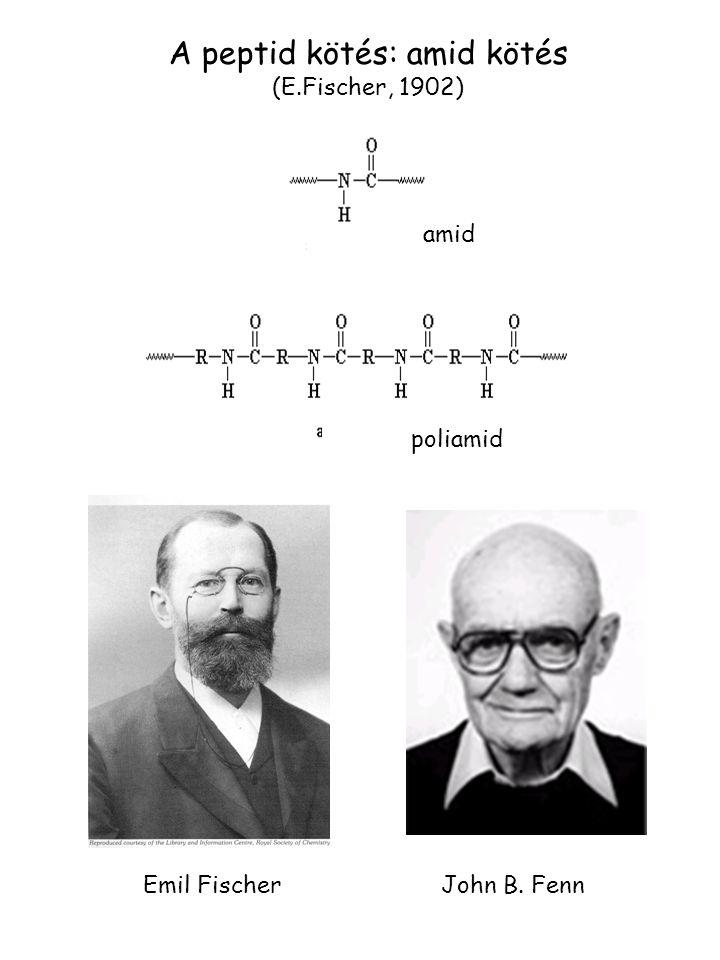 Emil Fischer John B. Fenn A peptid kötés: amid kötés (E.Fischer, 1902) amid poliamid