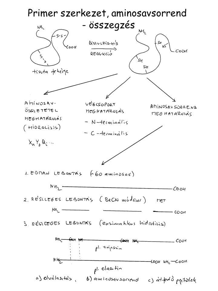 Primer szerkezet, aminosavsorrend - összegzés