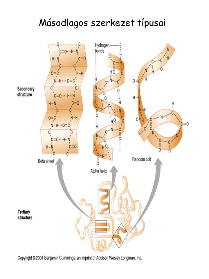 Másodlagos szerkezet típusai
