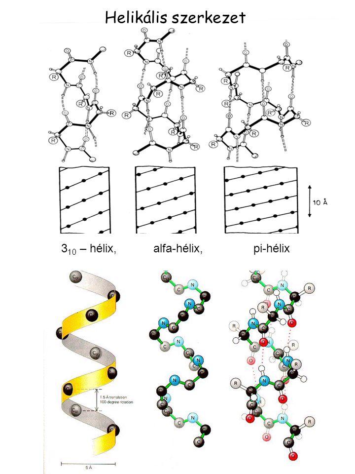 Helikális szerkezet 3 10 – hélix, alfa-hélix, pi-hélix