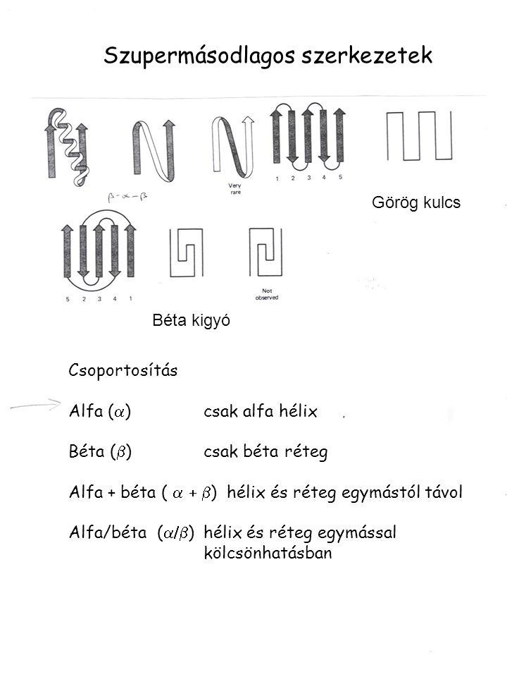 Szupermásodlagos szerkezetek Csoportosítás Alfa (  )csak alfa hélix Béta (  )csak béta réteg Alfa + béta (  ) hélix és réteg egymástól távol Al