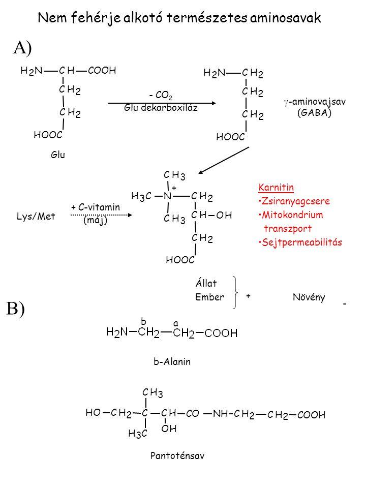 Nem fehérje alkotó természetes aminosavak NH 2 CHCOOH CH 2 CH 2 HOOC NH 2 CH 2 CH 2 CH 2 N + CH 2 CH CH 2 CH 3 CH 3 CH 3 OH CHC CH 3 CH 3 CH 2 OH OH C