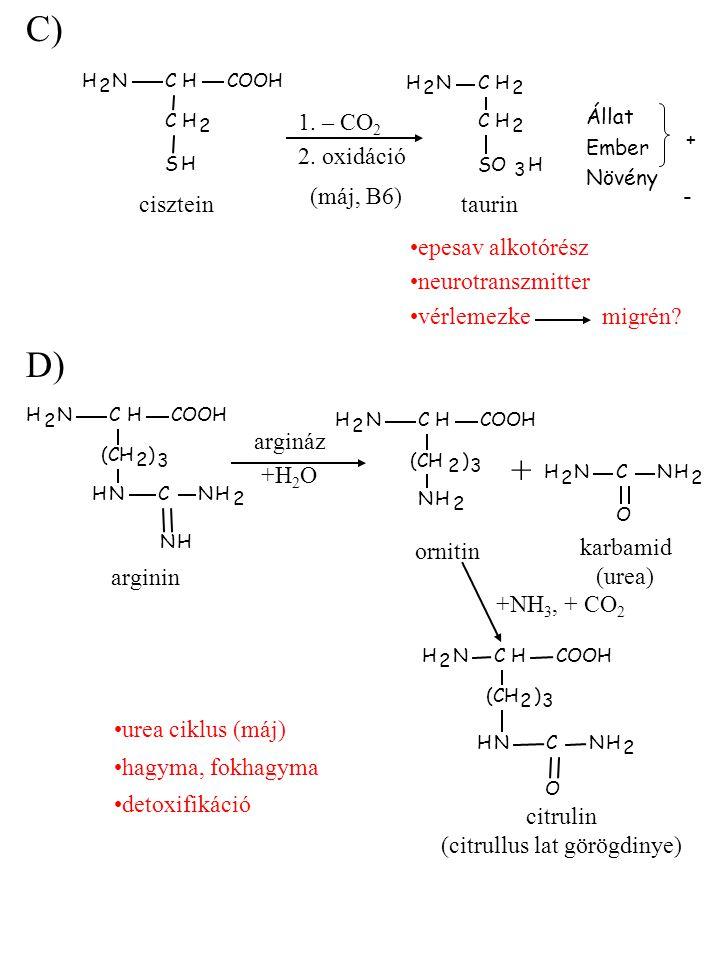 C) NH 2 CHCOOH CH 2 SH NH 2 CH (CH 2 ) 3 NHCNH 2 NH NH 2 CHCOOH (CH 2 ) 3 NH 2 NH 2 CNH 2 O NH 2 CHCOOH (CH 2 ) 3 NHCNH 2 O 1. – CO 2 2. oxidáció Álla