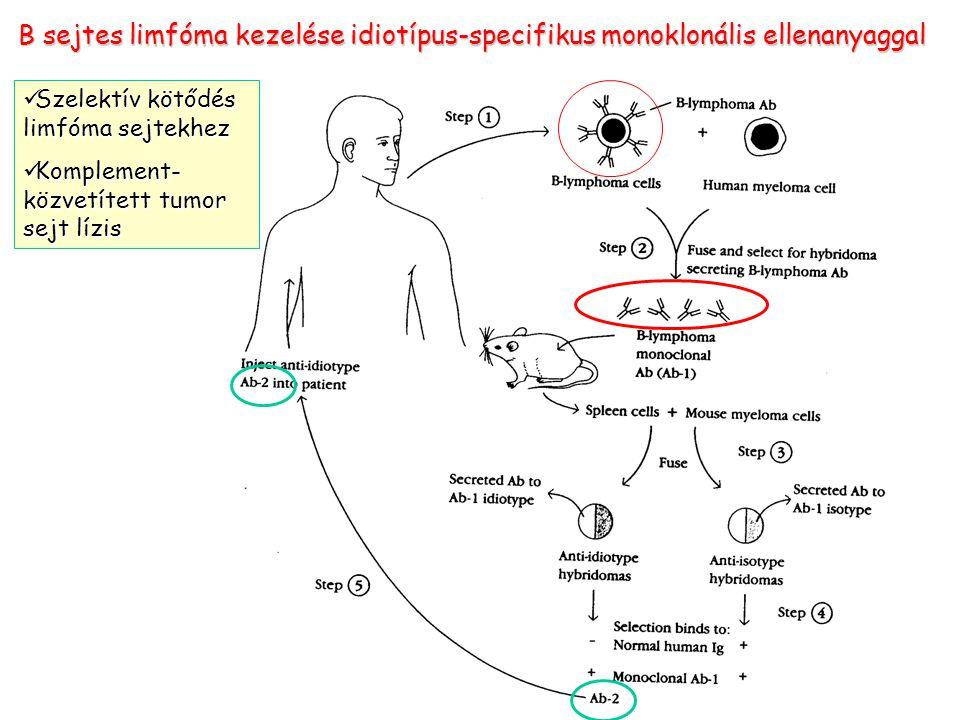B sejtes limfóma kezelése idiotípus-specifikus monoklonális ellenanyaggal Szelektív kötődés limfóma sejtekhez Szelektív kötődés limfóma sejtekhez Komp