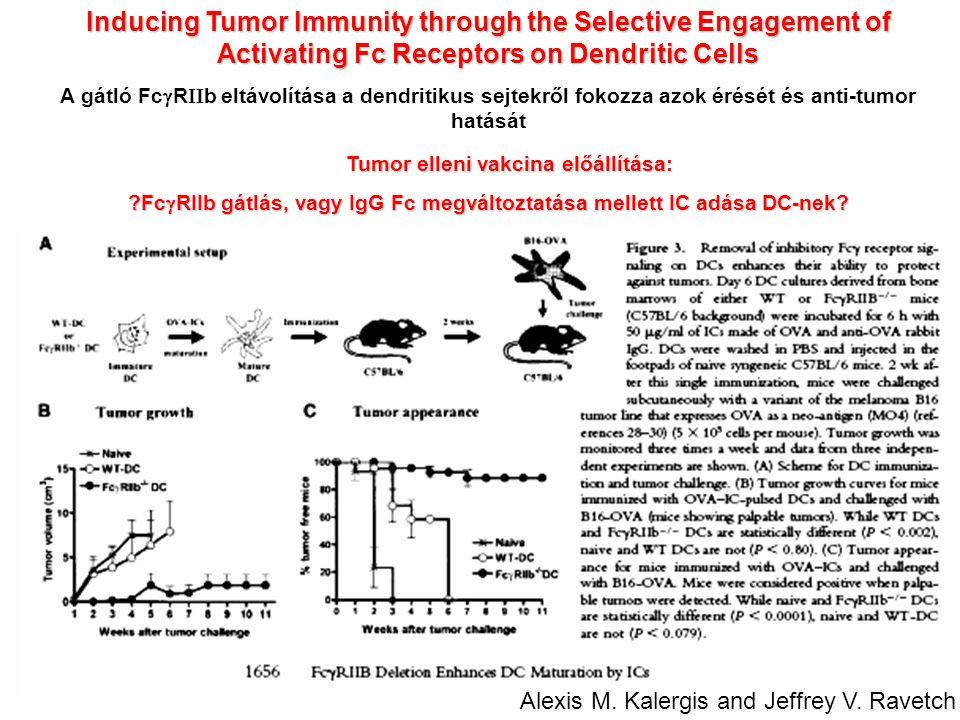 Inducing Tumor Immunity through the Selective Engagement of Activating Fc Receptors on Dendritic Cells A gátló Fc  R  b eltávolítása a dendritikus