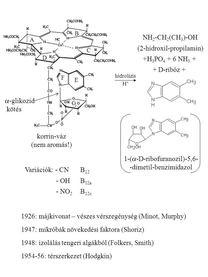 hidrolízis H + NH 2 -CH 2 (CH 3 )-OH (2-hidroxil-propilamin) +H 3 PO 4 + 6 NH 3 + + D-ribóz + 1-(  -D-ribofuranozil)-5,6- -dimetil-benzimidazol A B C