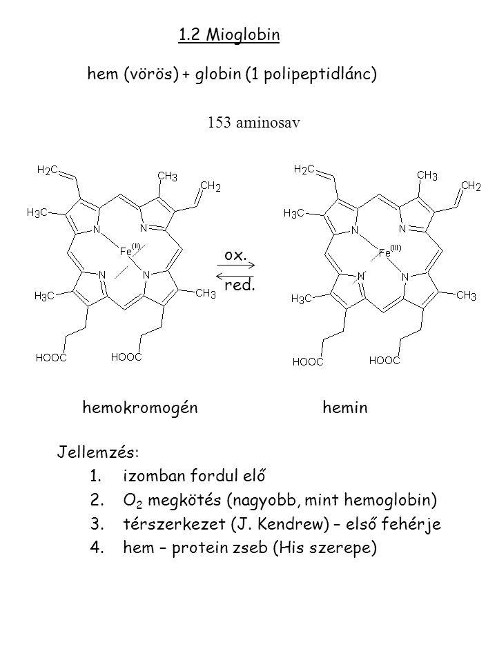 1.2 Mioglobin hem (vörös) + globin (1 polipeptidlánc) 153 aminosav ox. red. hemokromogénhemin Jellemzés: 1.izomban fordul elő 2.O 2 megkötés (nagyobb,