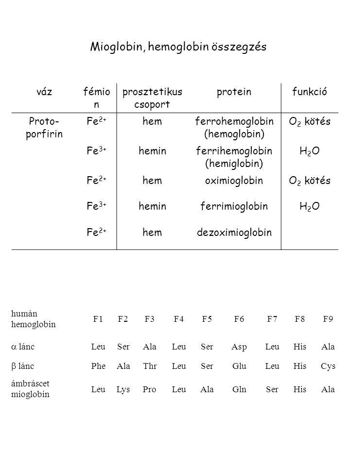Mioglobin, hemoglobin összegzés vázfémio n prosztetikus csoport proteinfunkció Proto- porfirin Fe 2+ hemferrohemoglobin (hemoglobin) O 2 kötés Fe 3+ h