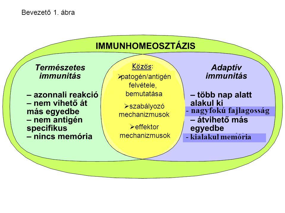 antimikrobiális peptidek MtMt veleszületett VELESZÜLETETT citokinek Treg 5-10 óra 1-2 hét Bevezető 2.