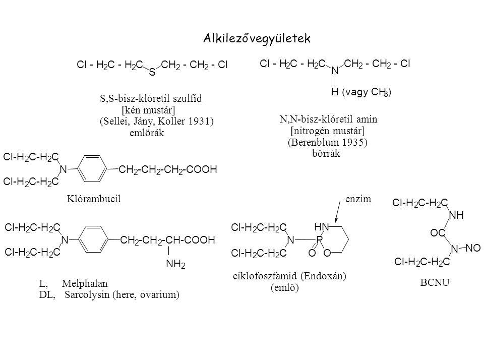 P O HN N Cl-H 2 C-H 2 C Cl-H 2 C-H 2 C O NH OC Cl-H 2 C-H 2 C N Cl-H 2 C-H 2 C NO Klórambucilenzim L, Melphalan DL, Sarcolysin (here, ovarium) N Cl - H 2 C - H 2 CCH 2 - CH 2 - Cl S Cl - H 2 C - H 2 CCH 2 - CH 2 - Cl NCH 2 -CH 2 2 -COOH Alkilező vegyületek Cl-H 2 C-H 2 C BCNU Cl-H 2 C-H 2 C NCH 2 -CH 2 -CH-COOH ciklofoszfamid (Endoxán) (emlô) Cl-H 2 C-H 2 C H (vagy CH 3 ) N,N-bisz-klóretil amin [nitrogén mustár] (Berenblum 1935) bôrrák Cl-H 2 C-H 2 C NH 2 S,S-bisz-klóretil szulfid [kén mustár] (Sellei, Jány, Koller 1931) emlörák