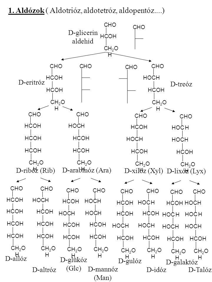 1. Aldózok ( Aldotrióz, aldotetróz, aldopentóz....) CHOHO HCHCOHOH CH2OHH2OH CHOHO D-glicerin aldehid CHOHO HCHCOHOH CH2OHH2OH HCHCOHOH CHOHO HOCH CH2