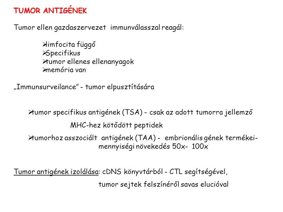 """TUMOR ANTIGÉNEK Tumor ellen gazdaszervezet immunválasszal reagál:  limfocita függő  Specifikus  tumor ellenes ellenanyagok  memória van """"Immunsurveilance - tumor elpusztítására  tumor specifikus antigének (TSA) - csak az adott tumorra jellemző MHC-hez kötődött peptidek  tumorhoz asszociált antigének (TAA) - embrionális gének termékei- mennyiségi növekedés 50x- 100x Tumor antigének izolálása: cDNS könyvtárból - CTL segítségével, tumor sejtek felszínéről savas elucióval"""