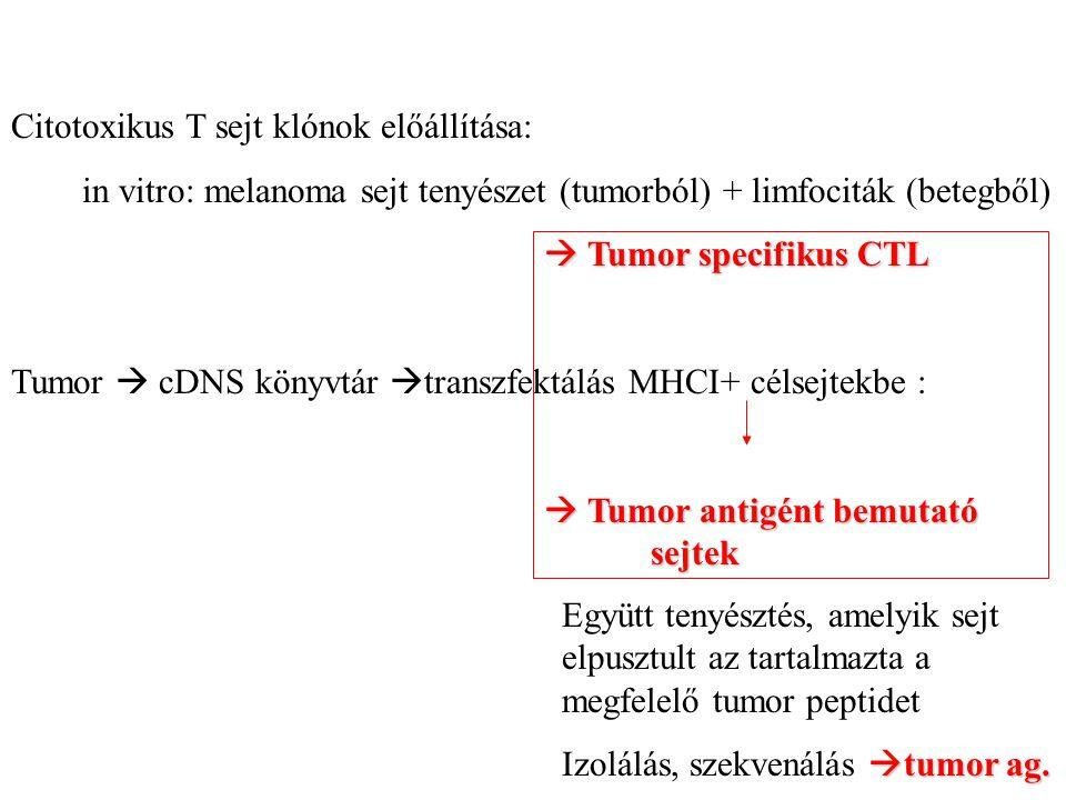 Citotoxikus T sejt klónok előállítása: in vitro: melanoma sejt tenyészet (tumorból) + limfociták (betegből)  Tumor specifikus CTL Tumor  cDNS könyvtár  transzfektálás MHCI+ célsejtekbe :  Tumor antigént bemutató sejtek Együtt tenyésztés, amelyik sejt elpusztult az tartalmazta a megfelelő tumor peptidet  tumor ag.