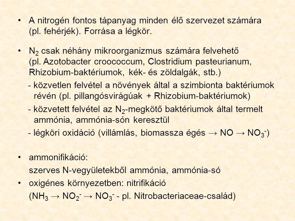 A nitrogén fontos tápanyag minden élő szervezet számára (pl. fehérjék). Forrása a légkör. N 2 csak néhány mikroorganizmus számára felvehető (pl. Azoto