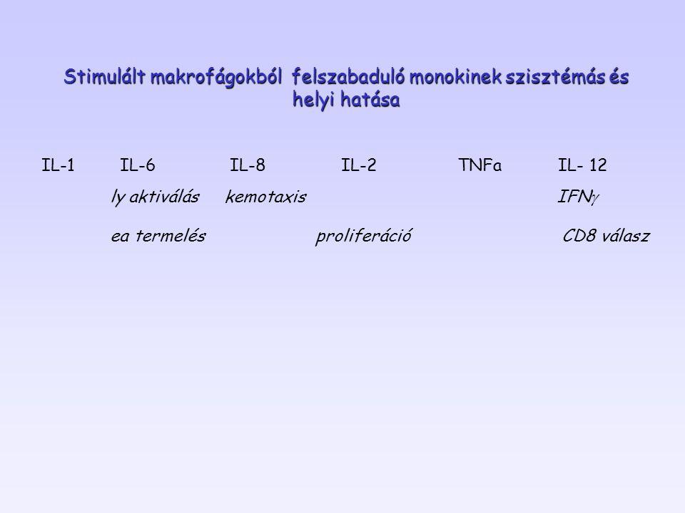 Stimulált makrofágokból felszabaduló monokinek szisztémás és helyi hatása IL-1 IL-6 IL-8 IL-2 TNFa IL- 12 ly aktiválás kemotaxis IFN g ea termelés pro