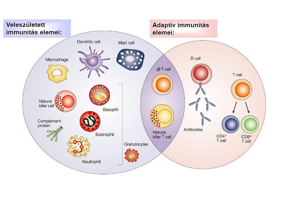 Veleszületett immunitás elemei: Adaptív immunitás elemei: