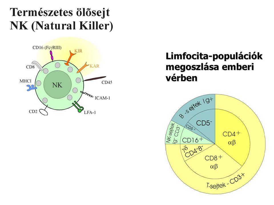 Limfocita-populációk megoszlása emberi vérben