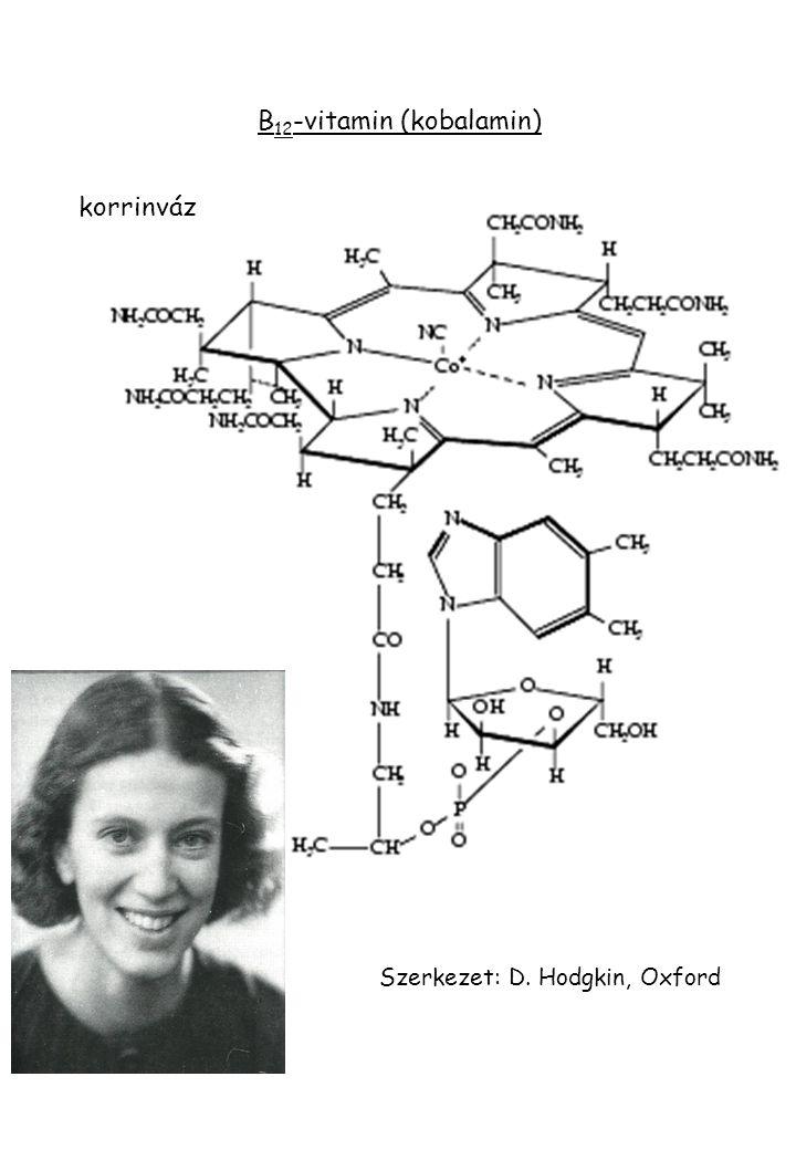 B 12 -vitamin (kobalamin) korrinváz Szerkezet: D. Hodgkin, Oxford