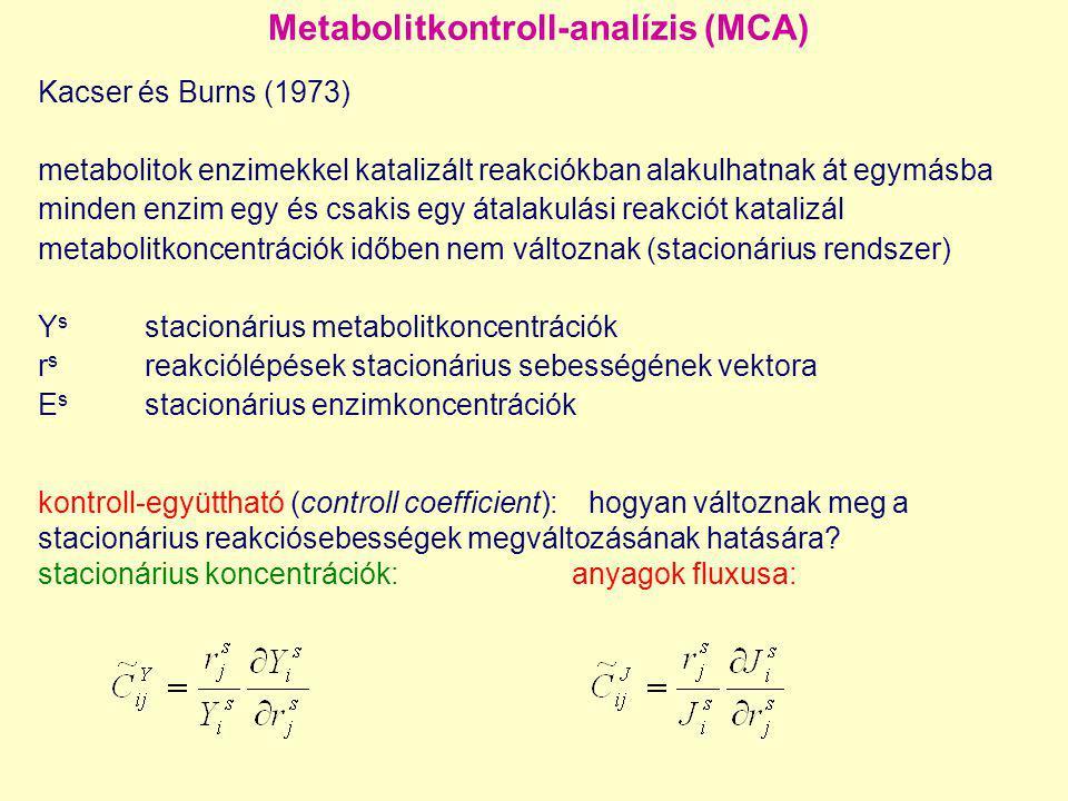 Metabolitkontroll-analízis (MCA) Kacser és Burns (1973) metabolitok enzimekkel katalizált reakciókban alakulhatnak át egymásba minden enzim egy és csa