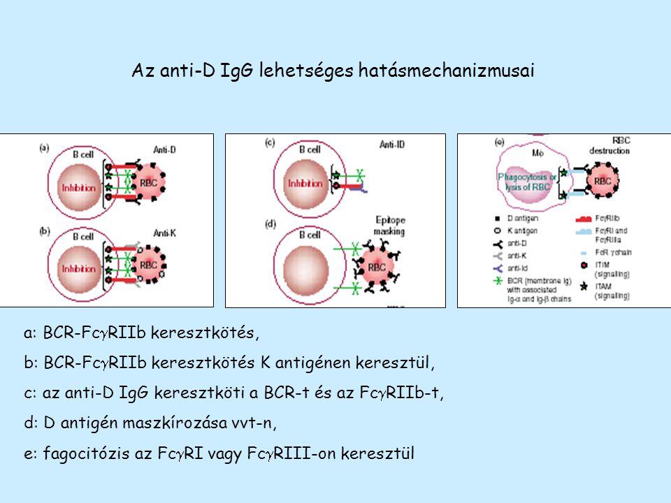 Az anti-D IgG lehetséges hatásmechanizmusai a: BCR-Fc  RIIb keresztkötés, b: BCR-Fc  RIIb keresztkötés K antigénen keresztül, c: az anti-D IgG keres