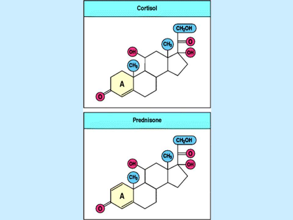 OH O CH 2 OH C=O CH 2 OH C=O OH O CH 2 OH C=O O O O CH 2 OH C=O O Kortizon Prednizon (4x hatásosabb) kortizol prednizolon 11C-OH - aktív, =O – inaktív (in vivo átalakulás) szintetikus termékek: Szerkezete: OH