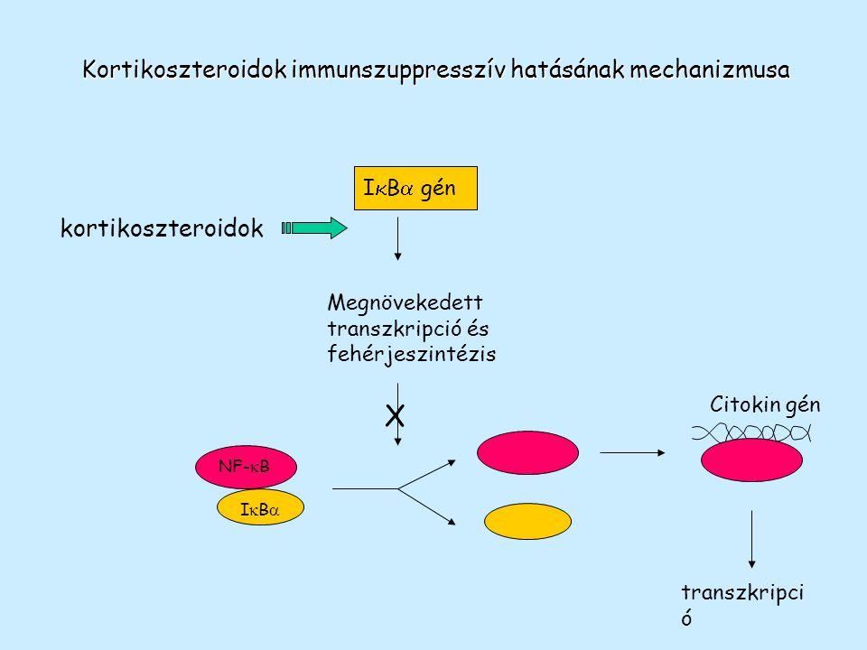 Kortikoszteroidok immunszuppresszív hatásának mechanizmusa Megnövekedett transzkripció és fehérjeszintézis NF-  B IBIB Citokin gén transzkripci ó