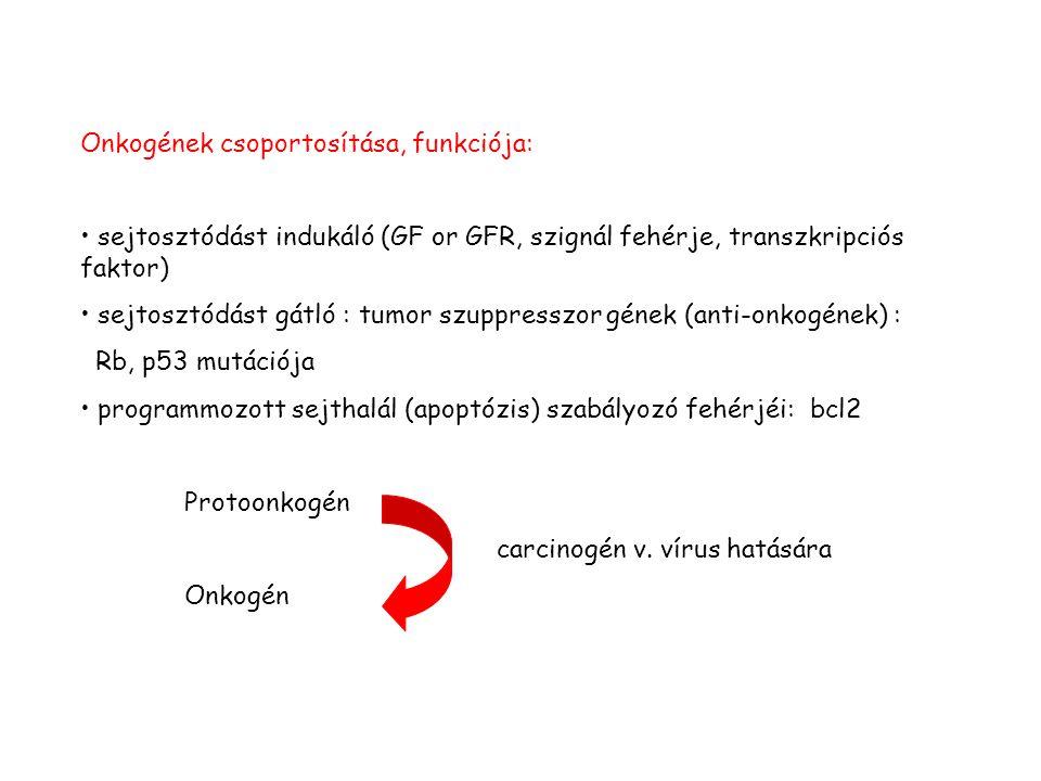 Onkogének csoportosítása, funkciója: sejtosztódást indukáló (GF or GFR, szignál fehérje, transzkripciós faktor) sejtosztódást gátló : tumor szuppresszor gének (anti-onkogének) : Rb, p53 mutációja programmozott sejthalál (apoptózis) szabályozó fehérjéi: bcl2 Protoonkogén carcinogén v.