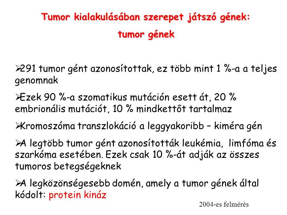 Tumor kialakulásában szerepet játszó gének: tumor gének  291 tumor gént azonosítottak, ez több mint 1 %-a a teljes genomnak  Ezek 90 %-a szomatikus mutáción esett át, 20 % embrionális mutációt, 10 % mindkettőt tartalmaz  Kromoszóma transzlokáció a leggyakoribb – kiméra gén  A legtöbb tumor gént azonosították leukémia, limfóma és szarkóma esetében.