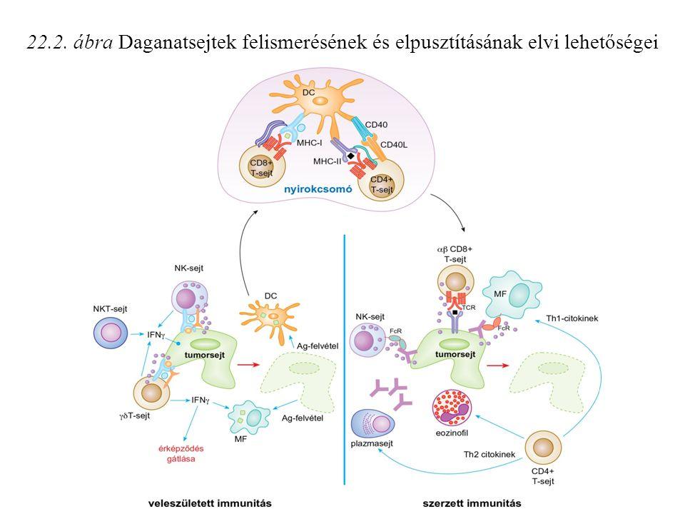 22.2. ábra Daganatsejtek felismerésének és elpusztításának elvi lehetőségei