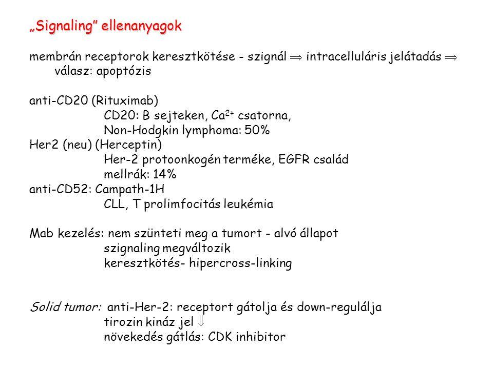 """""""Signaling ellenanyagok membrán receptorok keresztkötése - szignál  intracelluláris jelátadás  válasz: apoptózis anti-CD20 (Rituximab) CD20: B sejteken, Ca 2+ csatorna, Non-Hodgkin lymphoma: 50% Her2 (neu) (Herceptin) Her-2 protoonkogén terméke, EGFR család mellrák: 14% anti-CD52: Campath-1H CLL, T prolimfocitás leukémia Mab kezelés: nem szünteti meg a tumort - alvó állapot szignaling megváltozik keresztkötés- hipercross-linking Solid tumor: anti-Her-2: receptort gátolja és down-regulálja tirozin kináz jel  növekedés gátlás: CDK inhibitor"""