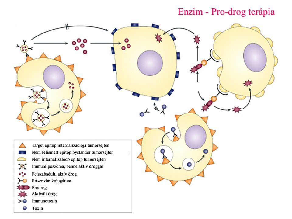 Enzim - Pro-drog terápia