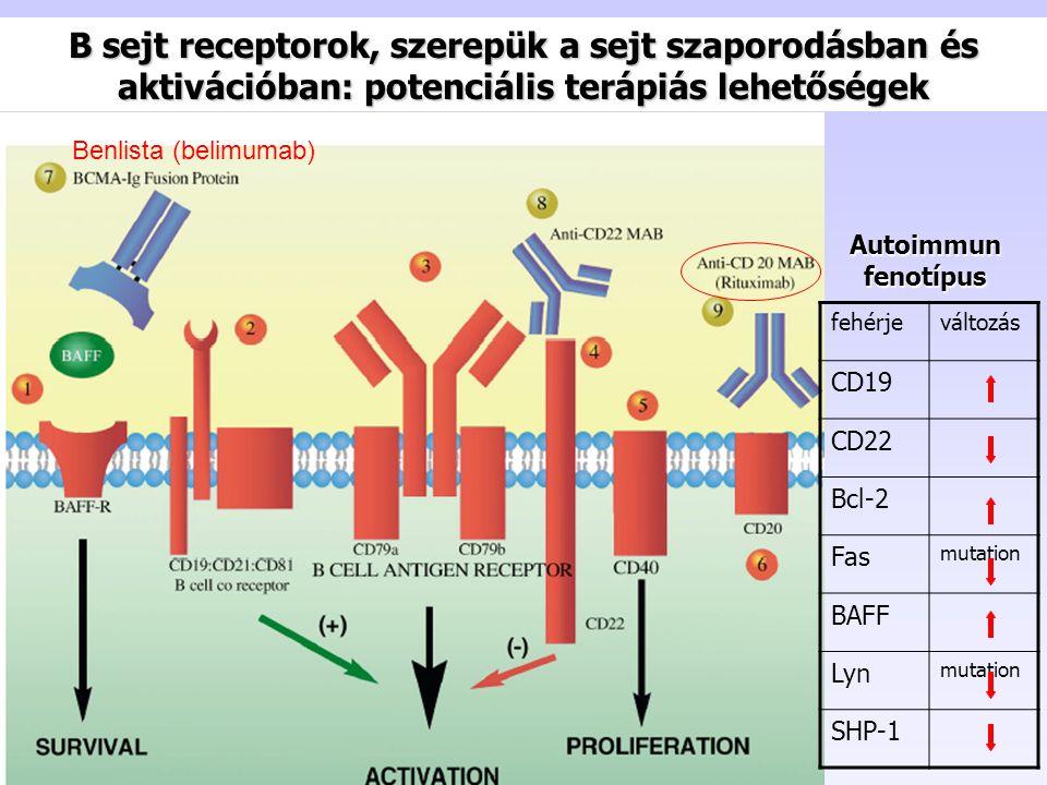 B sejt receptorok, szerepük a sejt szaporodásban és aktivációban: potenciális terápiás lehetőségek fehérjeváltozás CD19 CD22 Bcl-2 Fas mutation BAFF Lyn mutation SHP-1 Autoimmun fenotípus Benlista (belimumab)