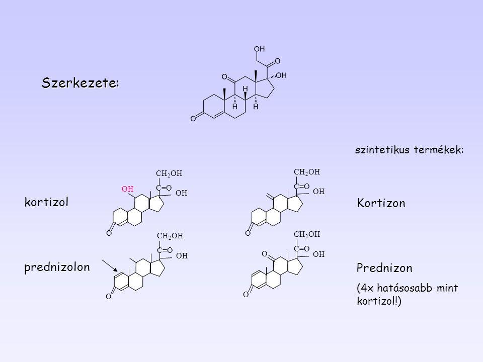 O OH OO O O Kortizon Prednizon (4x hatásosabb mint kortizol!) kortizol prednizolon szintetikus termékek: Szerkezete: CH 2 OH C=O OH CH 2 OH C=O OH CH 2 OH C=O OH CH 2 OH C=O OH
