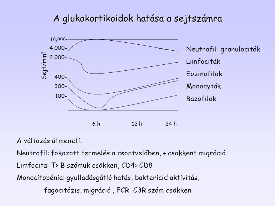 4,000- 2,000- 400- 300- 100- 10,000- Neutrofil granulociták Limfociták Eozinofilok Monocyták Bazofilok 6 h 12 h 24 h Sejt/mm 3 A glukokortikoidok hatá