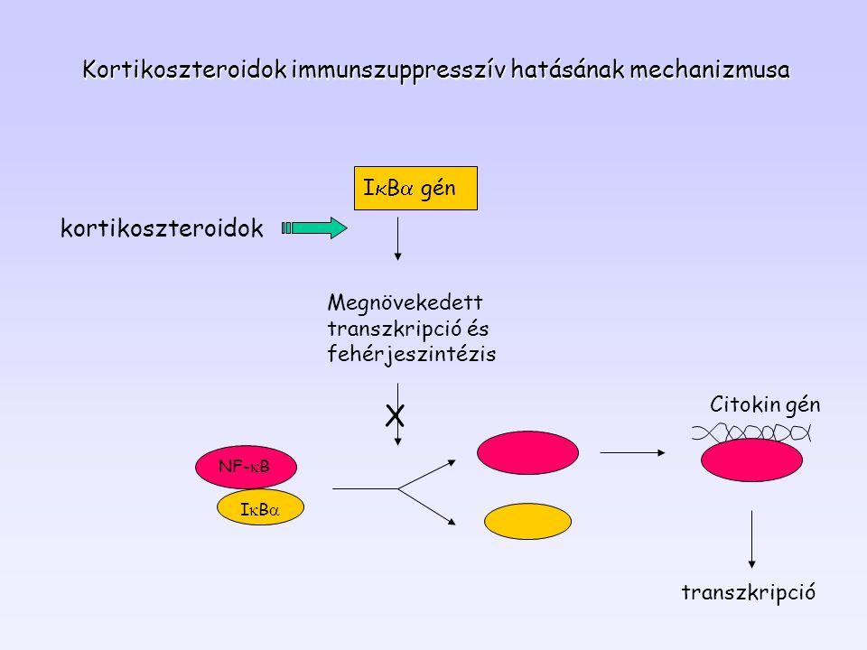Kortikoszteroidok immunszuppresszív hatásának mechanizmusa Megnövekedett transzkripció és fehérjeszintézis NF-  B IBIB Citokin gén transzkripció X kortikoszteroidok I  B  gén