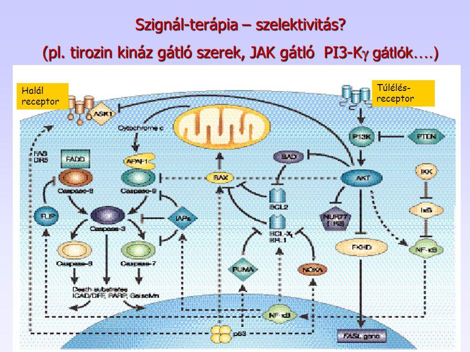 Szignál-terápia – szelektivitás? (pl. tirozin kináz gátló szerek, JAK gátló PI3-K  gátlók….) Halál receptor Túlélés- receptor
