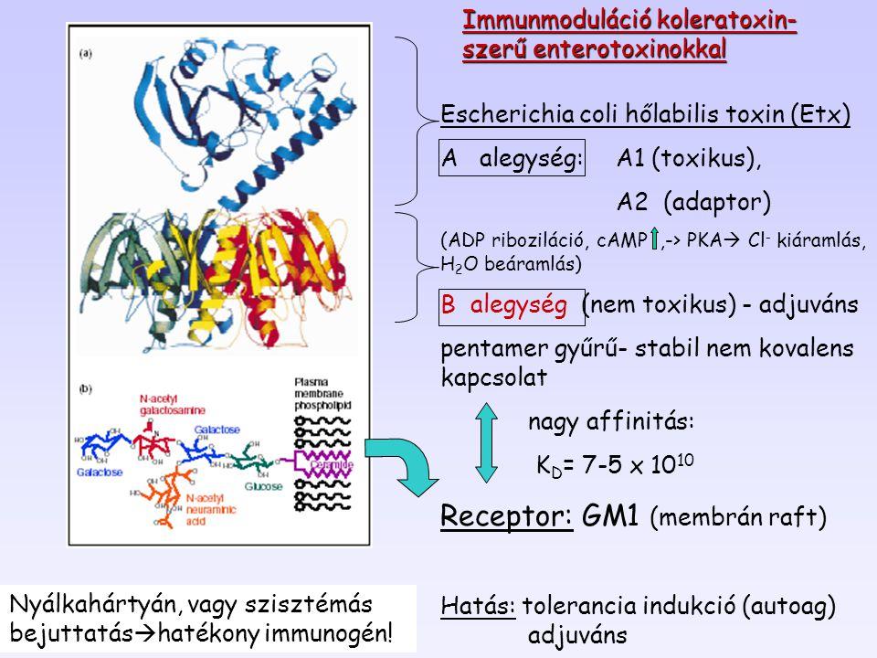 4,000- 2,000- 400- 300- 100- 10,000- Neutrofil granulociták Limfociták Eozinofilok Monocyták Bazofilok 6 h 12 h 24 h Sejt/mm 3 A glukokortikoidok hatása a sejtszámra A változás átmeneti.
