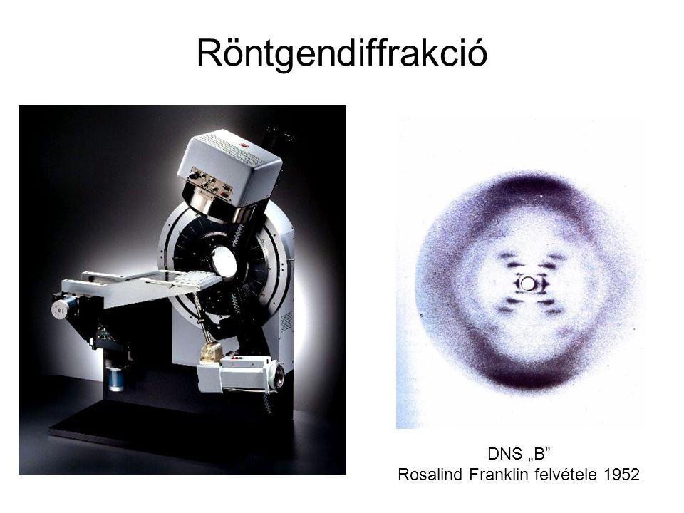 "Röntgendiffrakció DNS ""B"" Rosalind Franklin felvétele 1952"