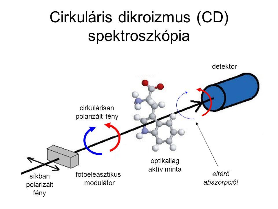 Cirkuláris dikroizmus (CD) spektroszkópia optikailag aktív minta cirkulárisan polarizált fény fotoeleasztikus modulátor eltérő abszorpció! detektor sí
