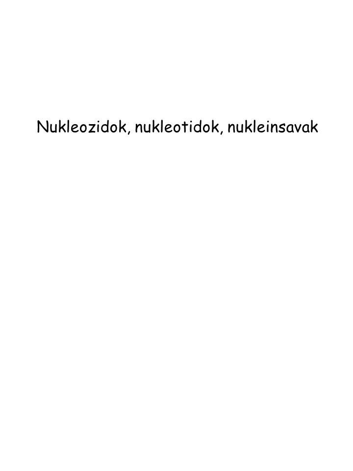 Nukleozidok, nukleotidok, nukleinsavak