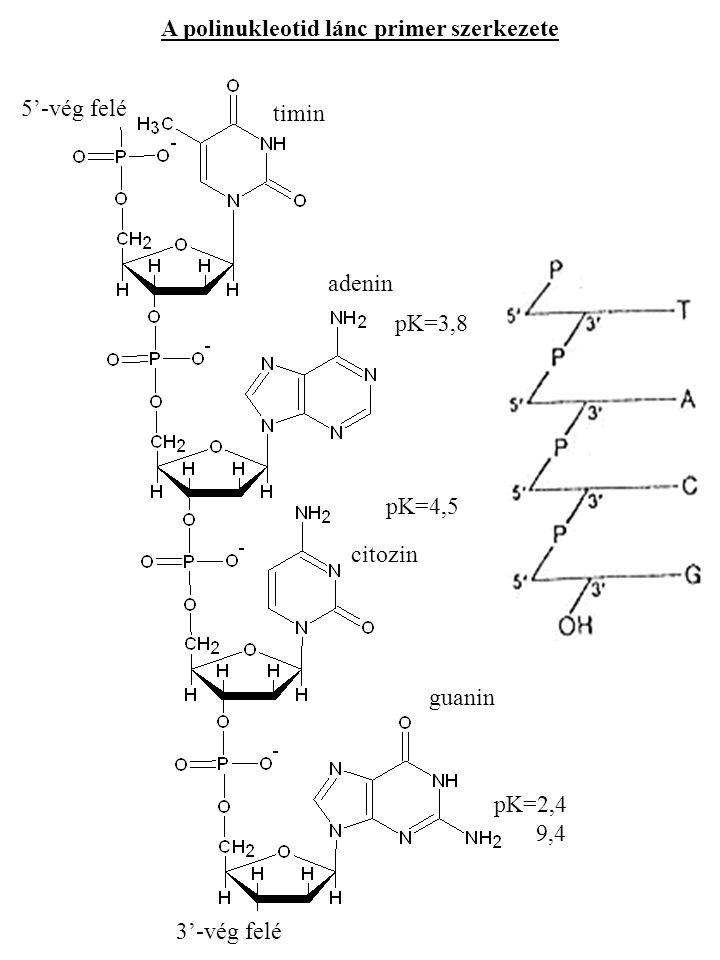 A polinukleotid lánc primer szerkezete timin adenin citozin guanin pK=3,8 pK=4,5 pK=2,4 9,4 5'-vég felé 3'-vég felé