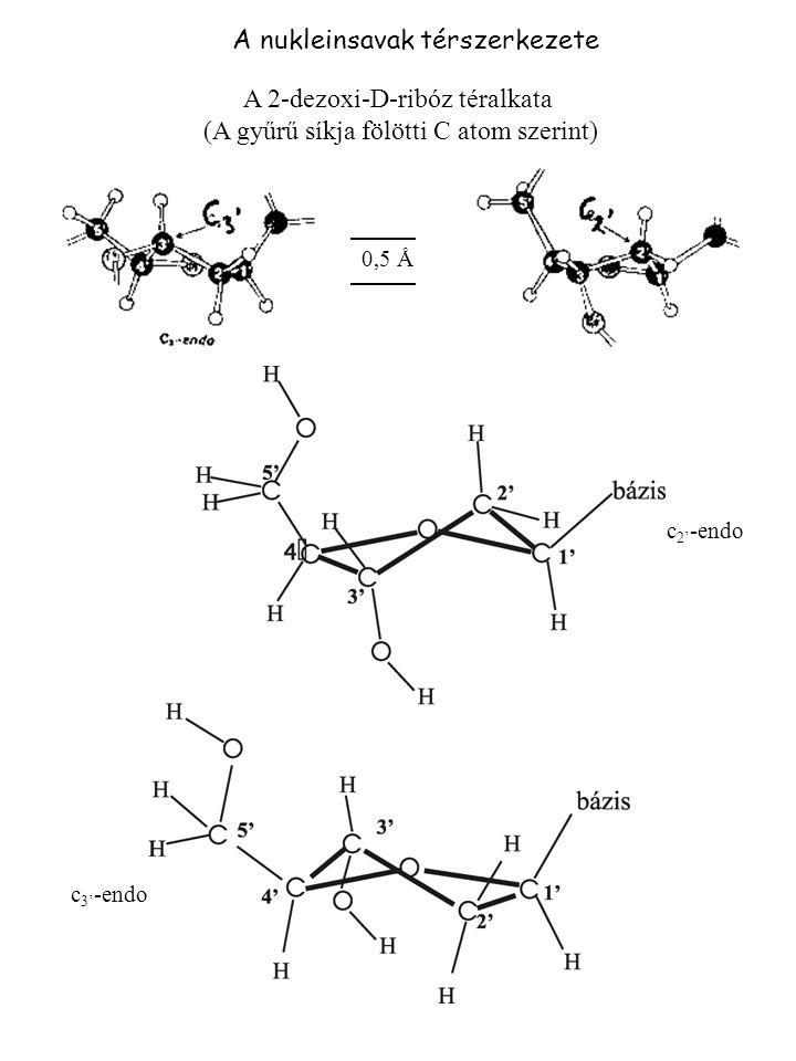 A nukleinsavak térszerkezete A 2-dezoxi-D-ribóz téralkata (A gyűrű síkja fölötti C atom szerint) c 3' -endo c 2' -endo 0,5 Å