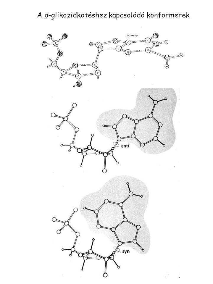 A  -glikozidkötéshez kapcsolódó konformerek