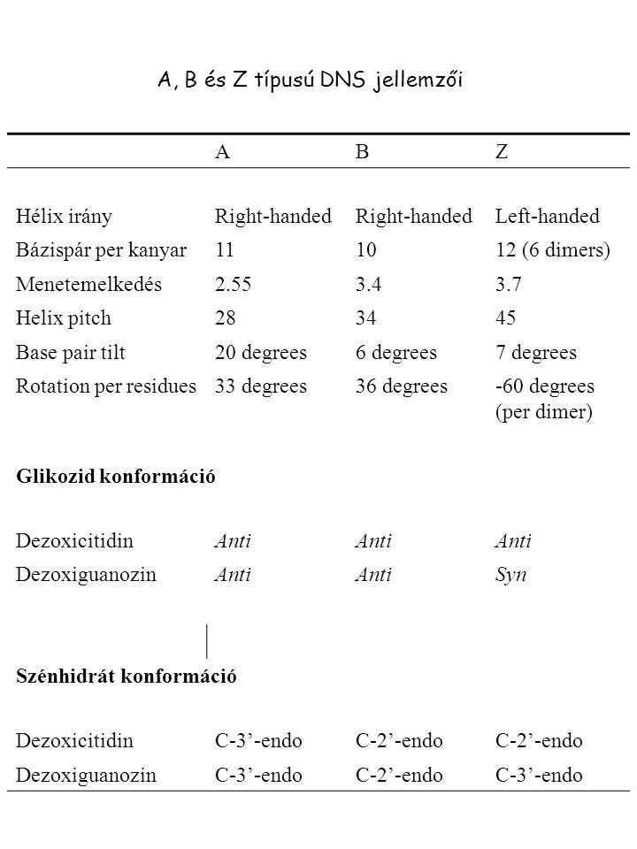 ABZ Hélix irányRight-handed Left-handed Bázispár per kanyar111012 (6 dimers) Menetemelkedés2.553.43.7 Helix pitch283445 Base pair tilt20 degrees6 degr